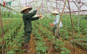 Hỗ trợ ứng dụng công nghệ cao vào nông nghiệp