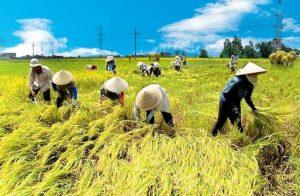 Nông nghiệp VN bền vững: Không nhất thiết cứ lớn hơn là tốt hơn